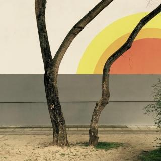#urbantree#pankow