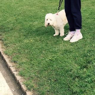 Englischer Rasen mit Hund und Frauchen.
