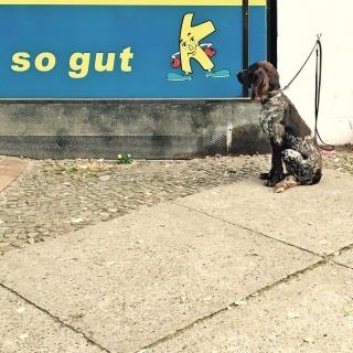 #Hund vor #kiezkalle #basicgermanwords