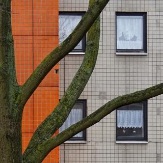 #mollo_urbantree